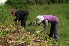 plantations dans le mandala