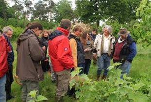 Découverte des plantes sauvages (récolte/usage) avec Marc Grollimund